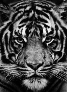 Robert Longo, Tiger, Galerie Jeanne, Muenchen